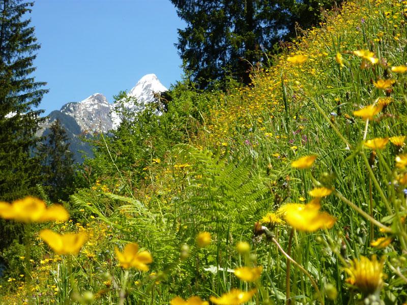 Singleurlaub österreich